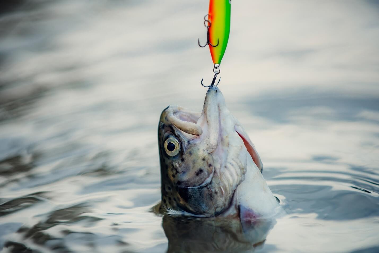 قلاب ماهیگیری